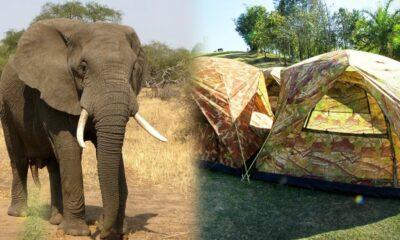 แตกตื่น! ช้างป่าเขาใหญ่เหยียบนักท่องเที่ยวในเต็นท์จนเสียชีวิต