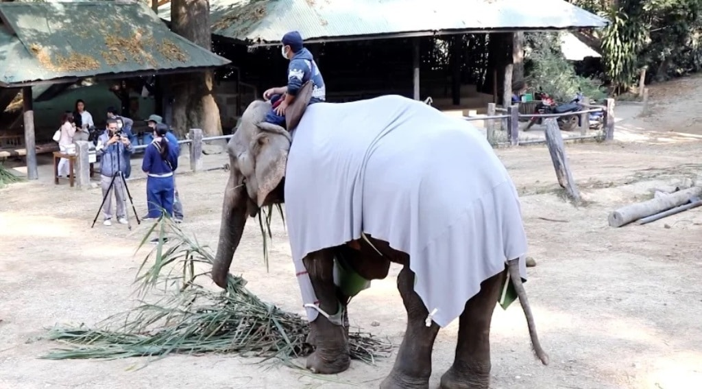 ผู้ใจบุญทำเสื้อกันหนาวให้ น้องช้าง ภาคเหนือ