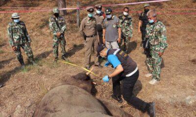 ช้างป่า 2 ตัวสู้ตายในสนามกอล์ฟจันทบุรี