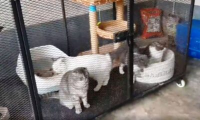 ตำรวจไทยยึดแมว 6 ตัวมูลค่าหลายพันดอลลาร์ในคดียาเสพติด