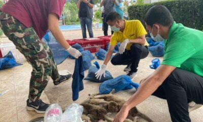 ลิงแสม 88 ตัวที่ถูกกำหนดให้เป็นโต๊ะอาหารค่ำในจีนได้รับการช่วยเหลือ