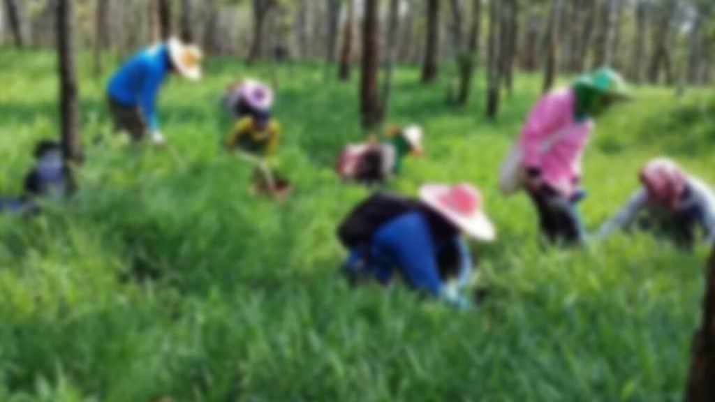 ผนึกกำลังช่วยคนไทย 7 คน เก็บเห็ด คอนเฟิร์มกักกัน
