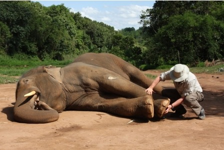 Treating Elephants with Osteopathy in Northern Thailand