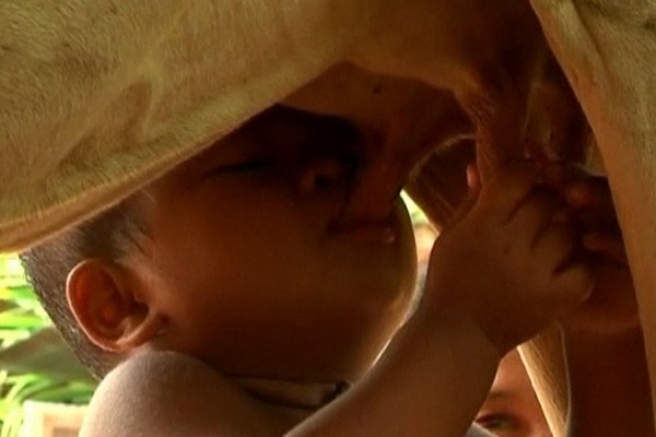 18-month-old Cambodian boy has taken to feeding himself by suckling directly from a cow.