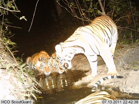 Rare Wildlife Caught on Camera in Thailand's Forests