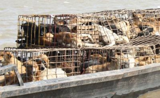 Royal Thai Navy Saves 800 Dogs