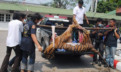 Tiger Butchers Caught in Bangkok