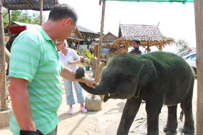 Two Baby Elephants Seized by Parks Officers