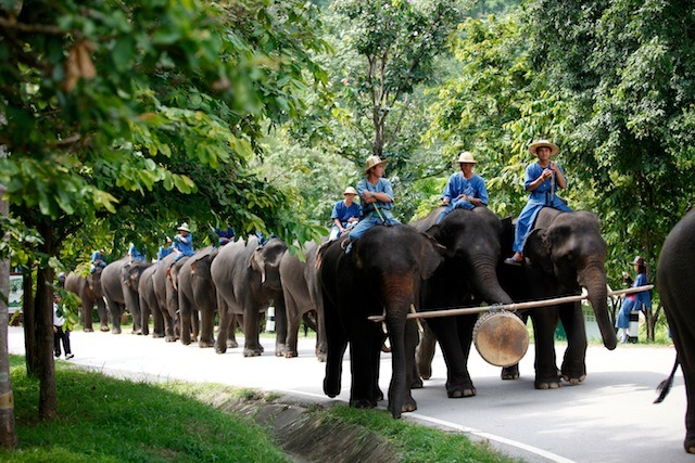 Chaang Thai the National Elephant Day