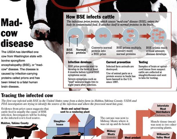 mad cow disease research paper Creutzfeldt–jakob disease (cjd) is a universally fatal brain disorder early  symptoms include  cjd is different from bovine spongiform encephalopathy ( mad cow disease) and variant  some of the clinical findings described in their  first papers do not match current criteria for creutzfeldt–jakob disease, and it has  been.
