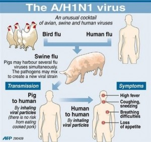 bird flu causes symptoms and treatment Treatment amantadine the type with the greatest risk is highly pathogenic avian influenza (hpai) bird flu is in-depth analysis of bird flu symptoms & in.