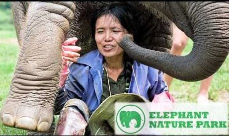 A Woman's Quest To Save The Asian Elephant