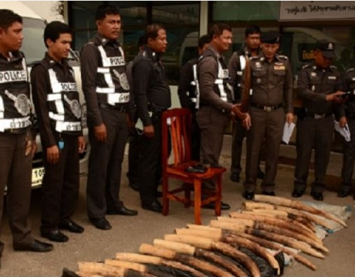 Thai Police Captian Busted with 20 Elephant Tusks