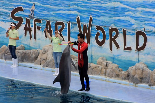 Safari World in Bangkok Seeks Permission to Import Six Beluga Whales from Russia
