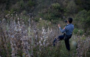 Myanmar police officer photographs a harvested poppy field in central Shan state, Myanmar.