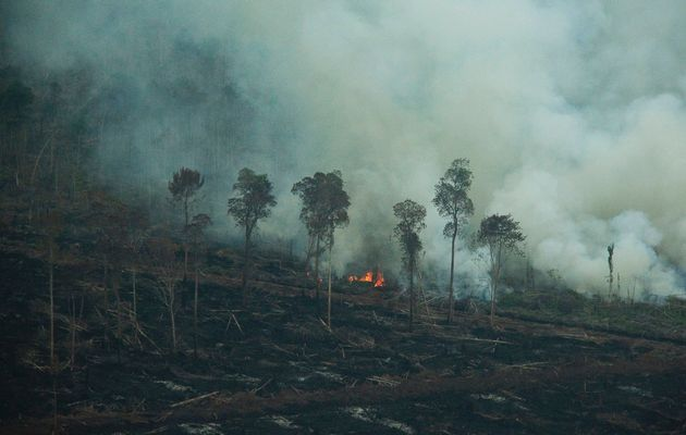 Burning of Fields in Northern Thailand