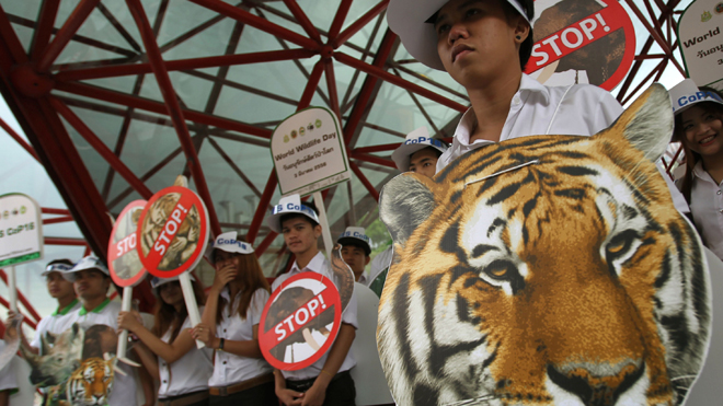 Thailand is one of the hubs of the world's illegal wildlife trade