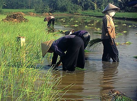 The study expects higher temperatures and more rainfall to decrease the feasibility of growing rain-fed rice in the lowlands of Thailand's northern Chiang Rai Province.