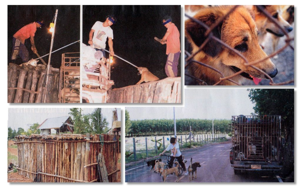 Bardot has issued an appeal to Thai Premier Yingluck Shinawatra to clamp down on the slaughtering of dogs