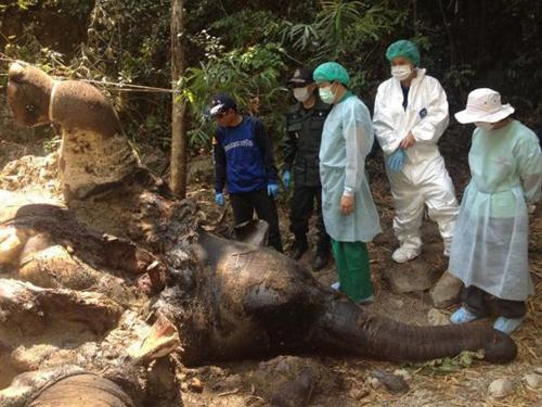 Prime Minister Wants Answers and Justice for Mother Elephants Killing