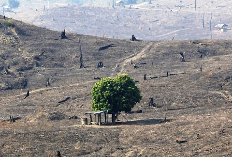 Alarm Over Mekong Region's Rapidly Disappearing Forests