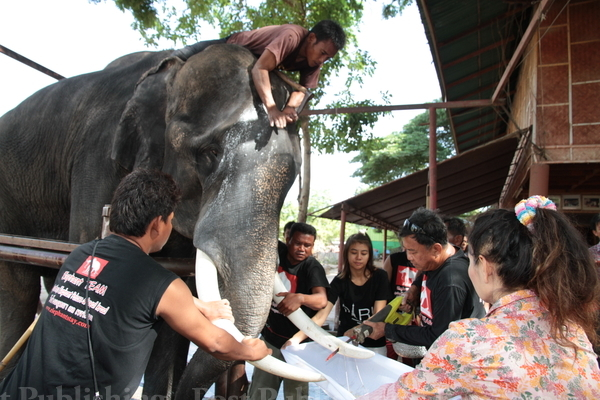 Thai Elephant Stomps Woman to Death and Gores Her Husband in Ayutthaya