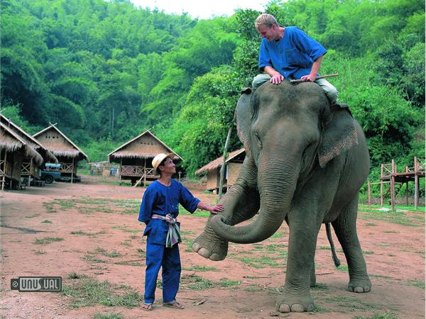 Thinking Like an Elephant in Thailand