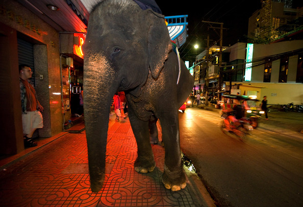 Friends of the Asian Elephant Foundation Pushes to Get Elephants out of Cities