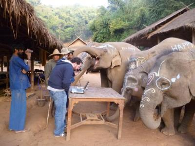 """New Research Reveals how Elephants """"See the World"""""""