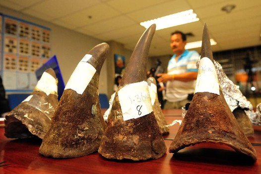 Guinean Arrested with Illegal Rhinoceros Horns Worth More than 10 Million Baht