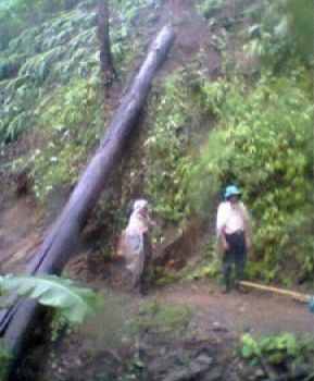 Falling Tree Kills Mother and Daughter in Chiang Rai