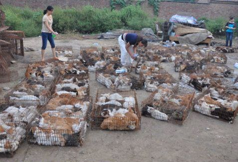 90 Cats Rescued from Smuggling Near Thai Border
