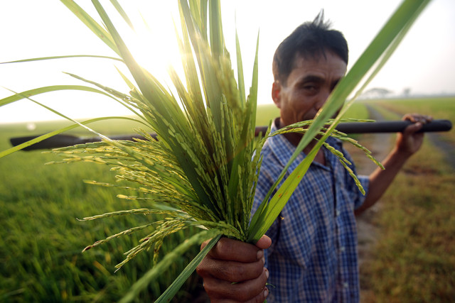 Thailand's Rice Policy Committee Raises Rice for Farmers, After Cabinet Reshuffle