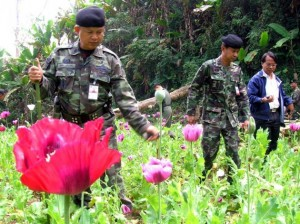 Thai soldiers destroy the poppy plantation field in Tak province