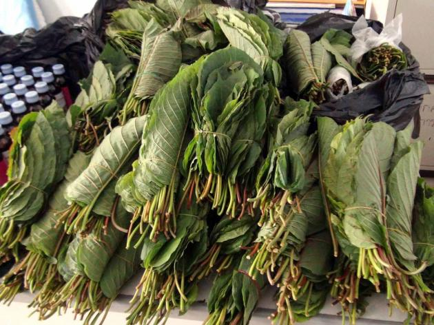 Justice minister pushes for legalisation of the herb, citing medicinal properties
