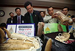 Thai officials have seized 105 kilograms (230 pounds) of smuggled ivory at the airport worth 16 million baht ($500,000). They say the haul of tusks and ivory beads was headed from Angola to Cambodia when it was found in a routine bag scan