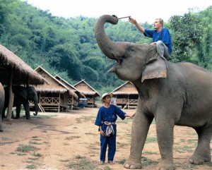 Learn to train elephants during a 'mahout' course at the elephant camp at Anantara Resort Golden Triangle, near Chiang Rai, Thailand.