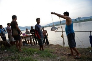 A fisherman holds a fish he caught in the Mekong river in Wiang Kaen