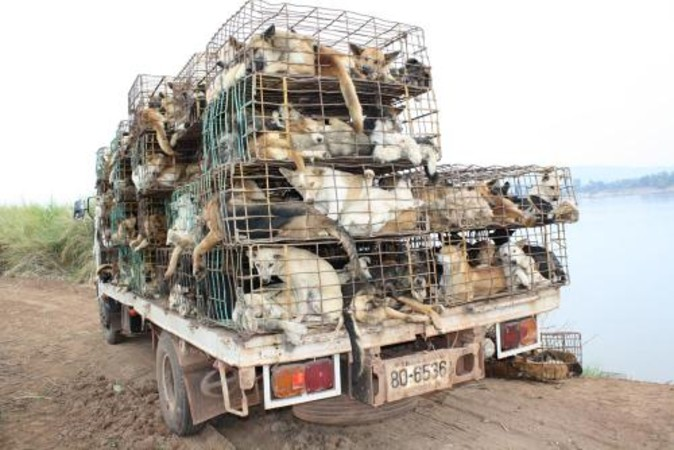 The number of dog-laden trucks passing through is endless