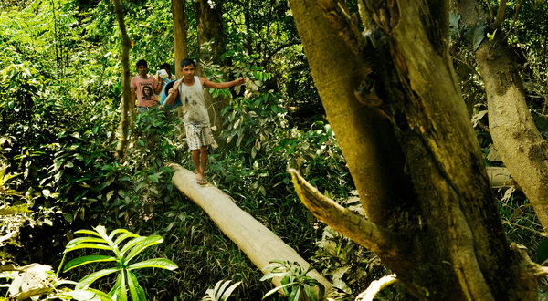 People walk on felled kratom trees in a wildlife sanctuary in southern Thailand while on their way to go fishing