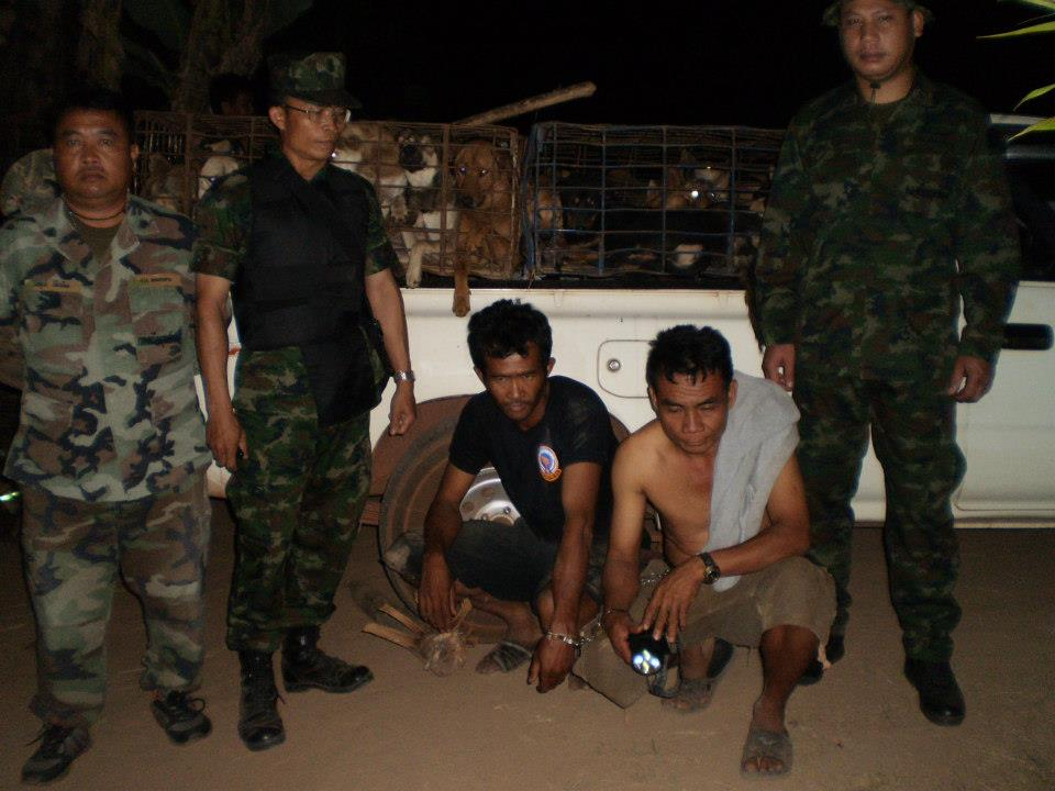 The Mekong River Unit of The Royal Thai Navy intercepted and arrested smugglers attempting to move dogs across the Mekong River in the NE province of Bung Khong Kan. 244 dogs have been saved and 12 unfortunately were found dead due to the horrendous conditions in which they were transported.