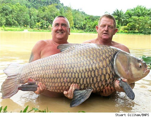 Catch of the day: Keith Williams (L) and Stuart Gillham with the 134lb Siamese carp