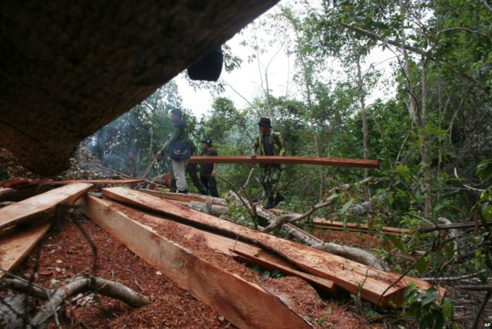 Thai Forestry Officials Kill Three Cambodians for Illegal Logging