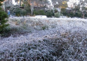 In Nakhon Thai district, and frost was observed on grass.