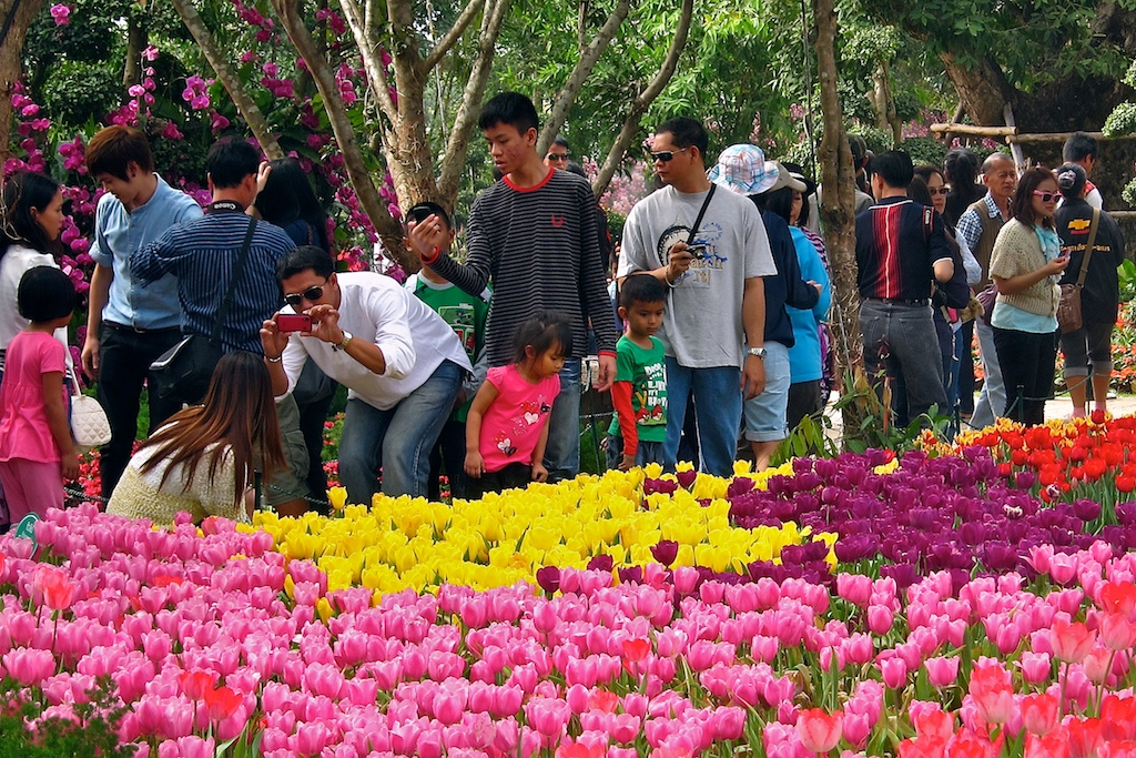 Chiang Rai's 10th flower festival would be held between December 20 to January 20 next year.