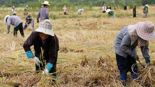 Thailand's Rice Exporters Expect Increase Rice Exports for 2014