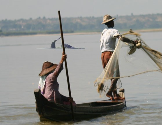 Endangered Irrawaddy Dolphin Threatened by Over Fishing