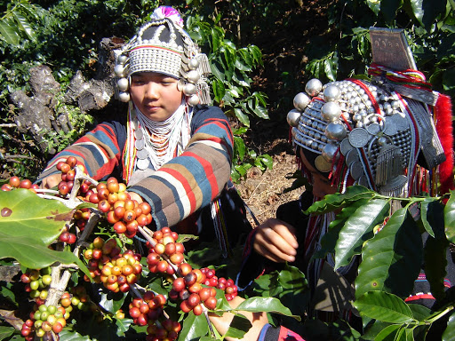 Chiang Rai Coffee Brands Win EU Recognition