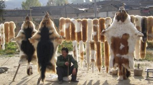 Man Selling Dog Pelts in Vietnam