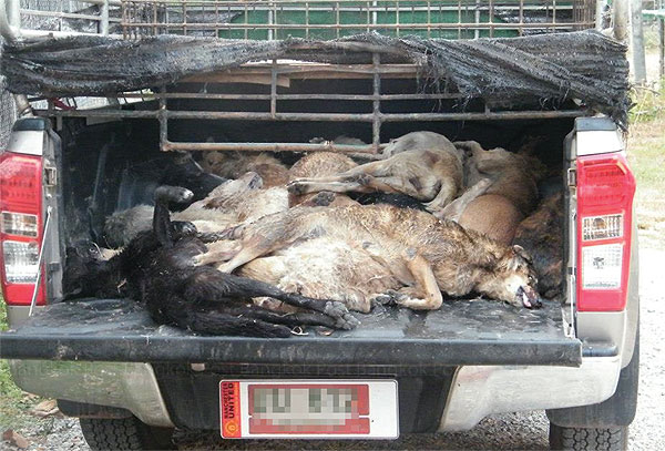 Thailand's Illegal Dog Meat Trade, Going Through Hell for Leather